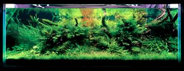Amano Aquascaping Mastering The Use Of Low Light Aquatic Plants Details Articles