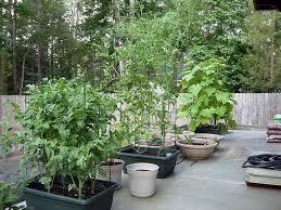 Patio Vegetable Garden Ideas Nice Patio Vegetable Garden Ideas Container Vegetable Gardening
