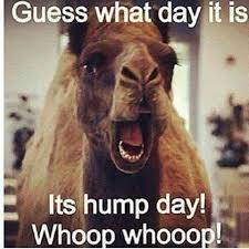 Hump Day Meme - hump day pictures photos and images for facebook tumblr