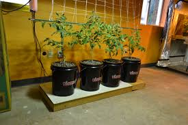 this is a new bubble bucket hydroponic growing system that we have