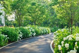 Fence Line Landscaping by I Would Like To Plant These Along Fenceline How Much Space Between