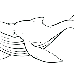 coloring page killer whale whale coloring pages whale coloring pages killer whale coloring page