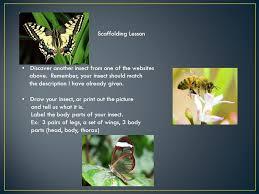 i am a butterfly by stephen swinburne 1st grade hollie smith