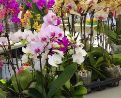 orchids for sale orchids for sale picture of mar farmers market artisan open