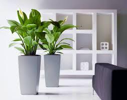 Plants For Desk Office Plants Planterra