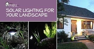 Landscape Up Lights Solar Lighting Lights Up Your Landscape Pretty Purple Door