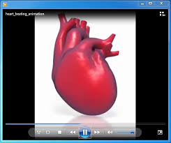 heart design for powerpoint beating heart animation for powerpoint vital organ heart powerpoint