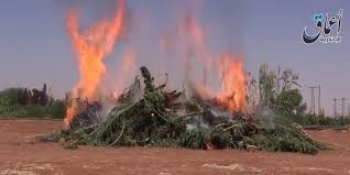Wildfire Weed by Isis Says It U0027s Burning Marijuana Fields In Syria Huffpost
