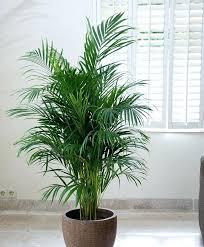 une plante dans une chambre plantes depolluantes chambre 5 plantes a mettre dans la chambre