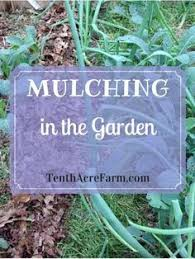 Best Type Of Mulch For Vegetable Garden - 5 things you should know about wood chip mulch vegetable garden
