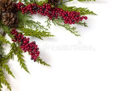 garland with pine cones and berries on white stock photo