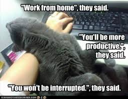 Working From Home Meme - cat at work meme at best of the funny meme