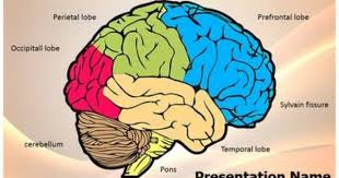 templates for powerpoint brain check out our professionally designed and world class neurology