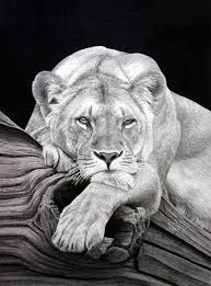 great pencil artists best 25 animal pencil drawings ideas on animal