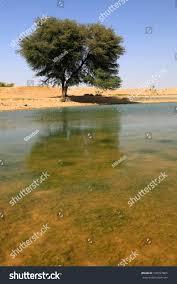 thar desert oasis thar desert india asia stock photo 100297865 shutterstock