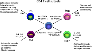 cd4 t cells articles neoreviews