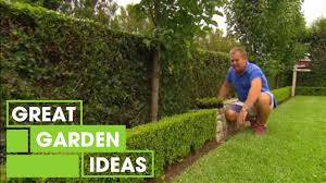 tips u0026 tricks for perfect hedging gardening great home ideas