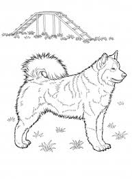 dog coloring pages online dog color pages printable husky coloring page super coloring