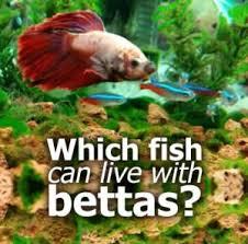 129 best fish images on aquarium fish fish tanks and
