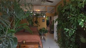 apartment plants 500 plants in one nyc apartment neighbors youtube