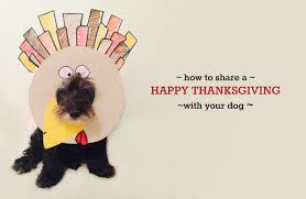 thanksgiving dog your dog called they u0027re thankful you u0027re going to share some