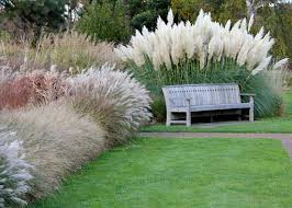 ornamental grasses as accent and border plants t y nursery