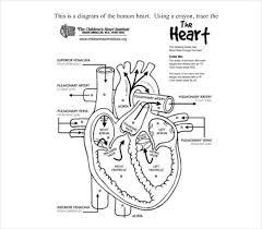 19 heart diagram templates u2013 sample example format download