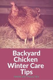 94 best livestock images on pinterest farm animals beef cattle