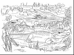 spectacular realistic alligator coloring pages alligator