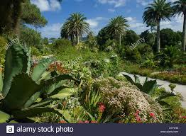 Tropical Plants Perth Tropical Garden Sub Champsbahrain Com
