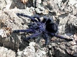 32 best tarantulas i want images on spiders insects