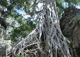 angkor wat cambodia temple tour ta prohm