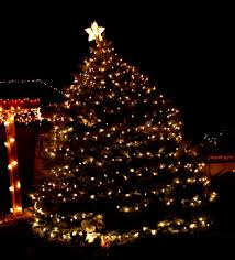 tree with white lights picture free