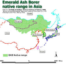 emerald ash borer map pest management and the environment pme