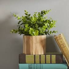 Desk Plant Indoor Desk Top Plants You U0027ll Love Wayfair