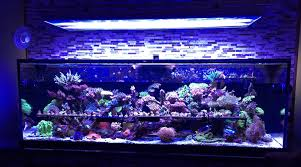Reef Aquarium Lighting Reef Aquarium Secrets Good Or Bad We Need To Share Them Featured
