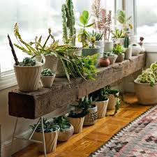 stylish indoor plant stands sunset