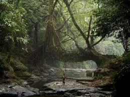 imagenes de paisajes lluviosos mawsynram el lugar más lluvioso del mundo coyotitos