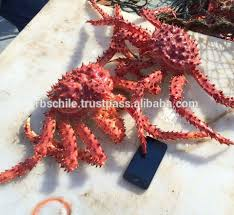 king crab king crab suppliers and manufacturers at alibaba com