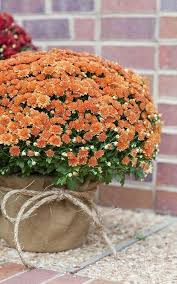 Fall Backyard Wedding Ideas Best 25 Fall Wedding Mums Ideas On Pinterest Fall Wedding