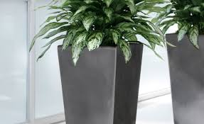plant artificial house plants charm buy artificial house plants