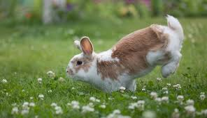 hopping bunny 26 bunnies who are literally jumping for the dodo