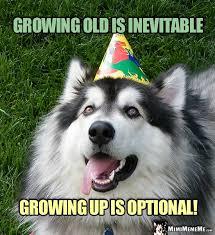 Happy Birthday Meme Dog - mimimememe dog jokes cat humor funny happy birthday memes