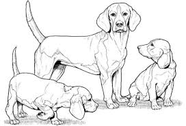 beagle dog coloring pages photo 366910 gianfreda net