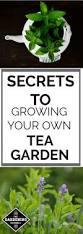 154 best herb gardening images on pinterest herbs garden