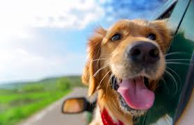 Wisconsin traveling with pets images Best tips for traveling with a dog jpg