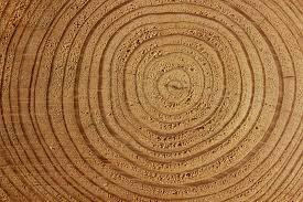 free photo wood tree bark tree bark log free image on