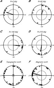magnetic compass orientation in two strictly subterranean rodents