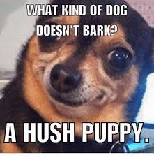 Puppy Memes - what kind of dog doesn t bark a hush puppy meme on me me