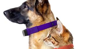 Gadgets For Pets 5 Gadgets For Your Animals U2013 5technologies